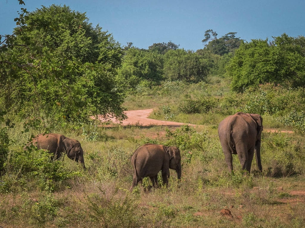 The best things to do in Sri Lanka - Udawalawe National Park safari to see elephants