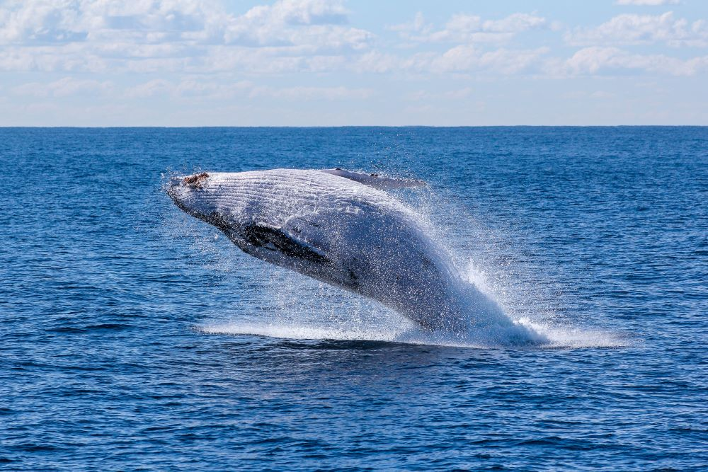 Best things to do in Sri Lanka - Whale watching in Mirissa